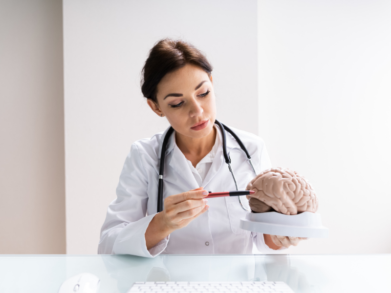 neurologist inspecting brain model in her hand with a pen